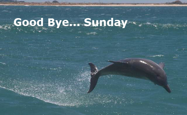 Goodbye Sunday the dolphin