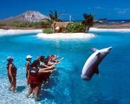 Dolphin at Sea Life Park