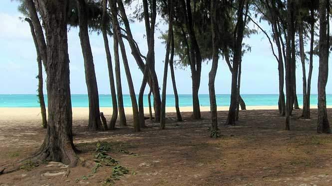 bellows-field-beach-park