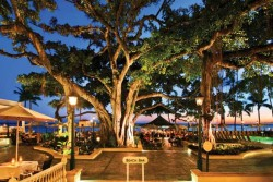 moana-hotel-banyan-tree-courtyard