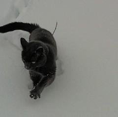 Harvey Stalking Taffy the Bad cat
