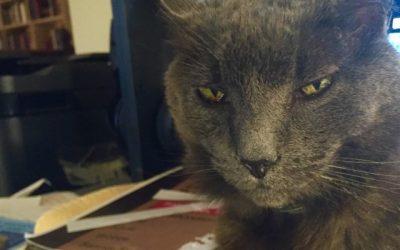 Harvey, the Grey Cat Rules
