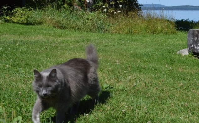 Audio of Harvey the Grey Cat Rules, Adventures of Harvey