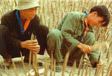 Setting Punji Sticks Vietnam War