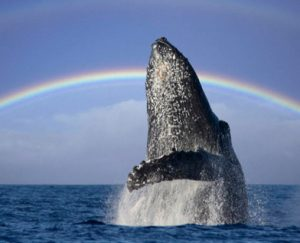 Whale-Watch