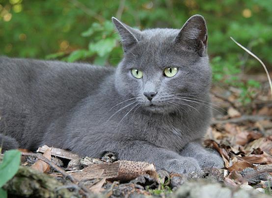 Harvey The Grey Cat width=