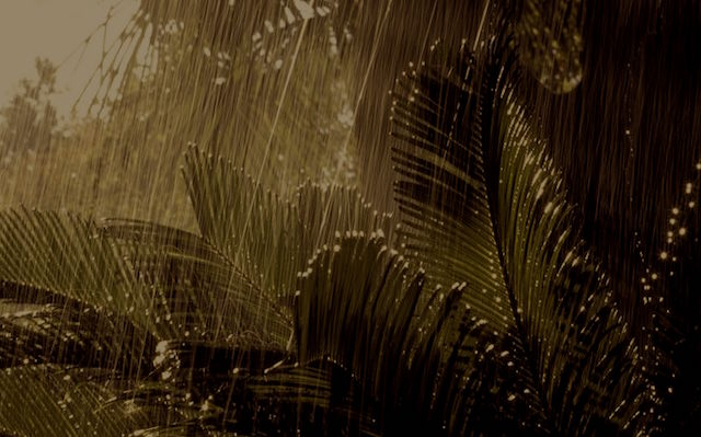 Heavy Rain Vietnam Jungle