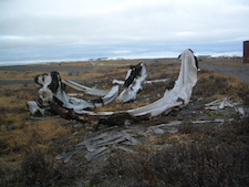 Whale Bones on Gambell Spit