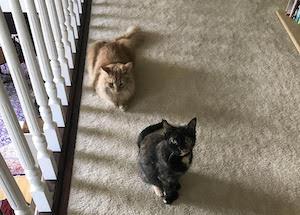 Bentley and Josie